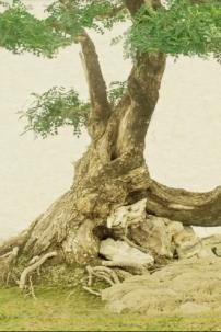 Trang Phục Trạng Quỳnh - Chú Cuội